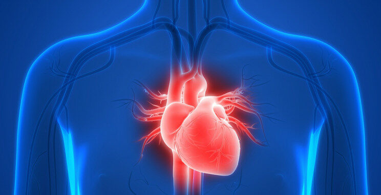 heart-cells-space-research_resize_md